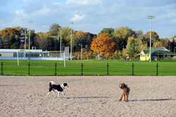 Greenwood Dog Park