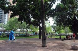 Allan Gardens Dog Park